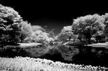Spring Snow 春の雪