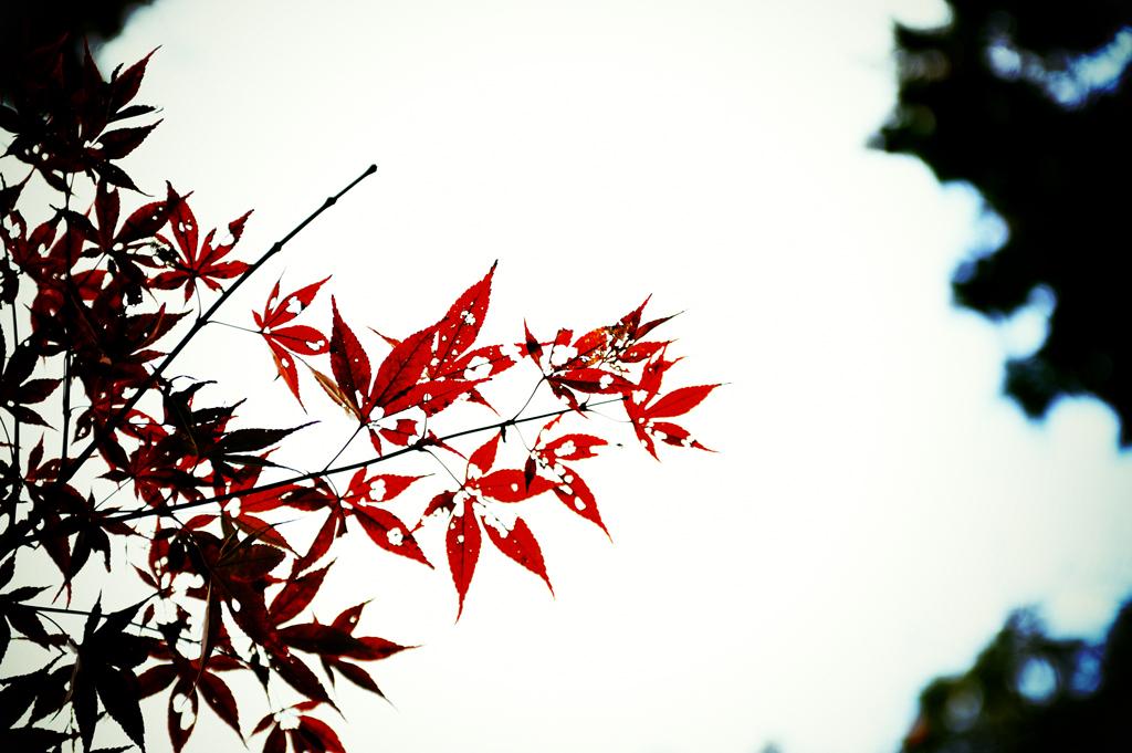 Leaf ~fin~