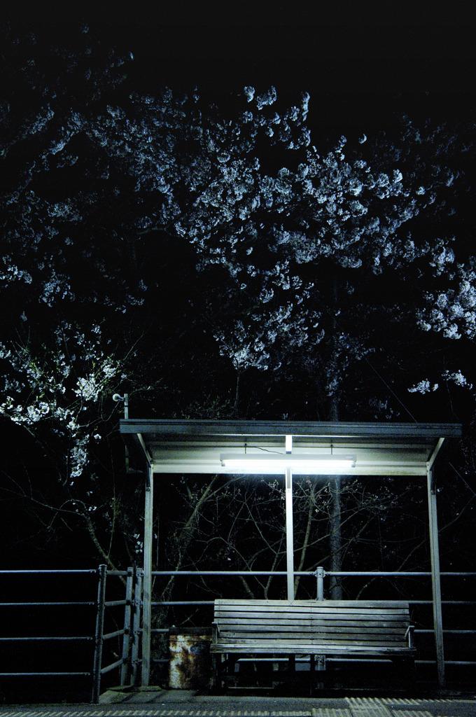 yoru-sakura