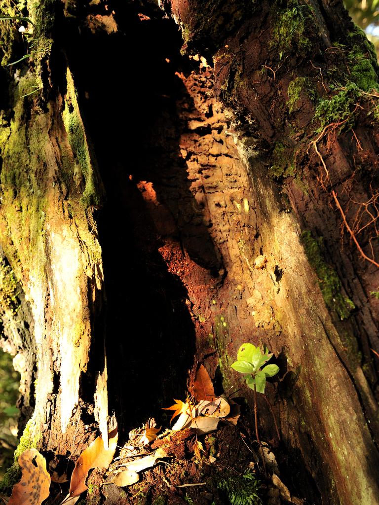 arashi karano kakurebasyo