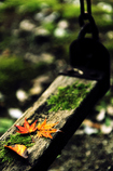otiba-branco