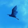 NIKON NIKON D70で撮影した動物(bird)の写真(画像)