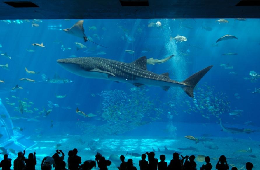 サメが出た
