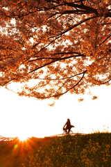 桜、菜の花、その間を駆け抜ける自転車