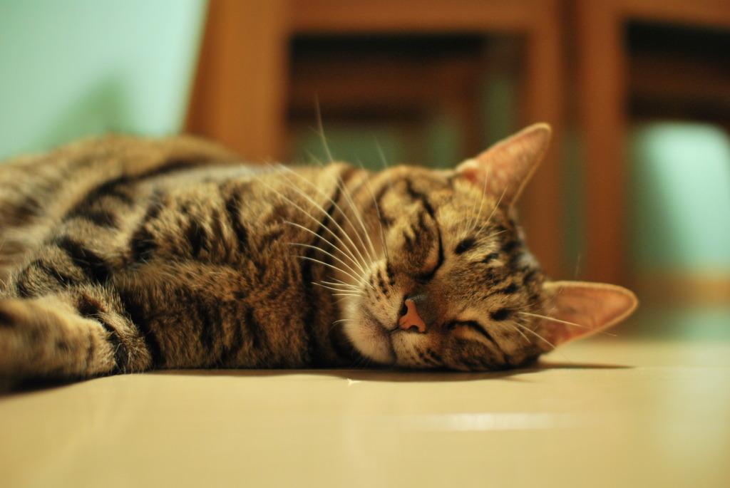 寝る子、ネコ