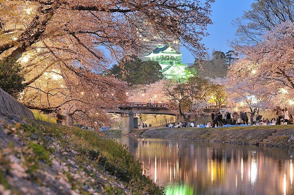 岡崎城と夜桜