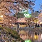NIKON NIKON D300で撮影した風景(岡崎城と夜桜)の写真(画像)