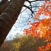秋を見上げて♪