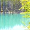 初夏の青池