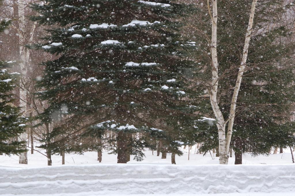 3月も終わりですが・・・雪の美瑛☆彡