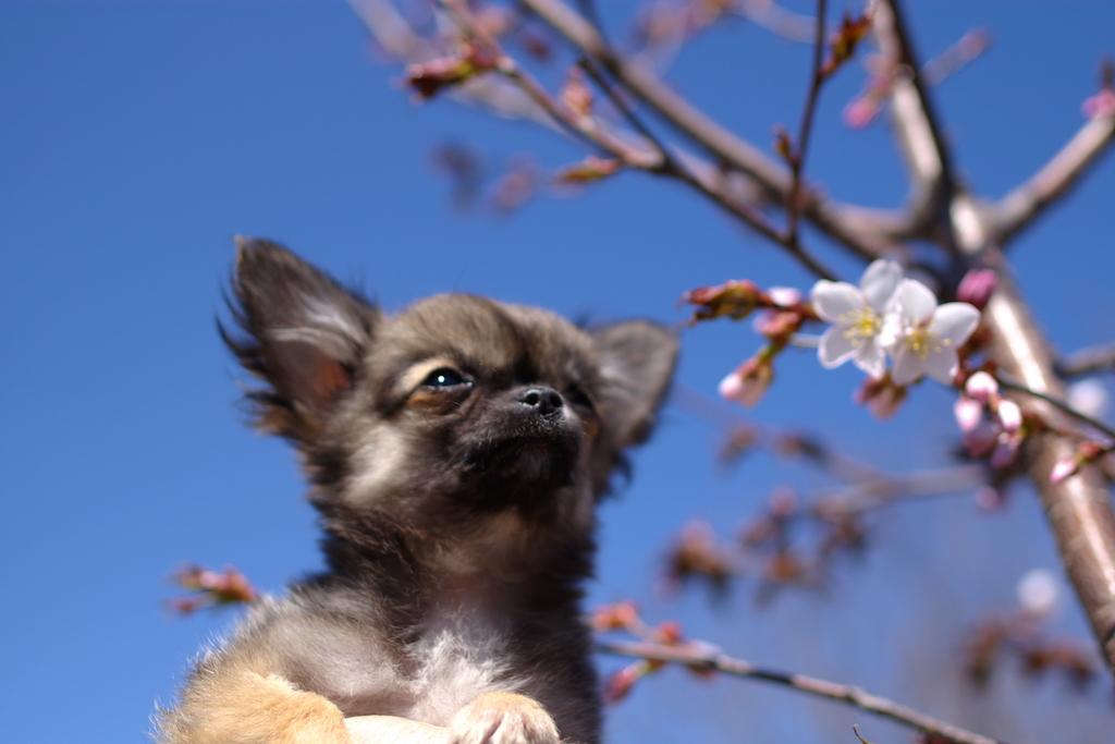 春の香り♪