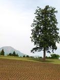 大山を望む丘