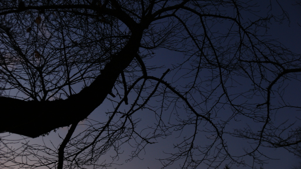 星を待つ木