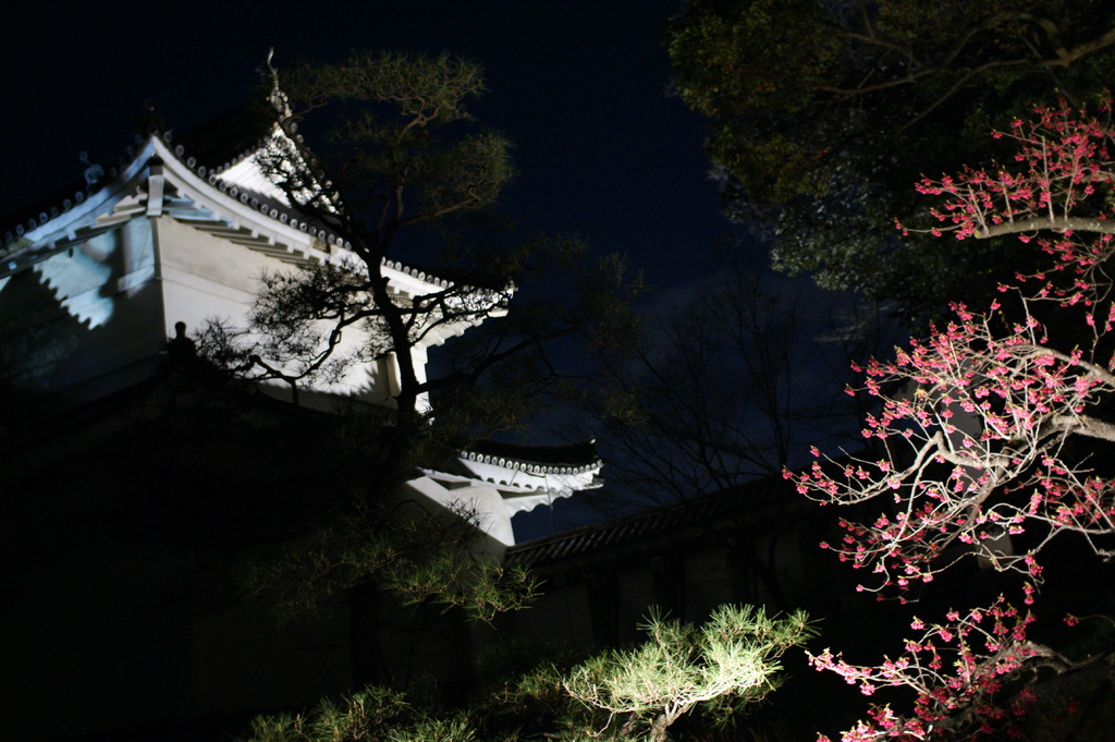 Traditional Japanese Castle