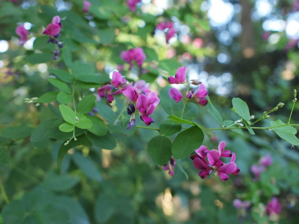 名を知らぬ花