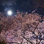 SONY DSLR-A350で撮影した建物(満月桜)の写真(画像)