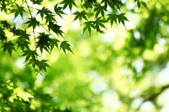 新緑のきらめき