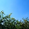 野生的向日葵
