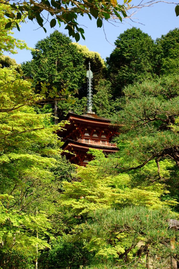 浄瑠璃寺にて(2)