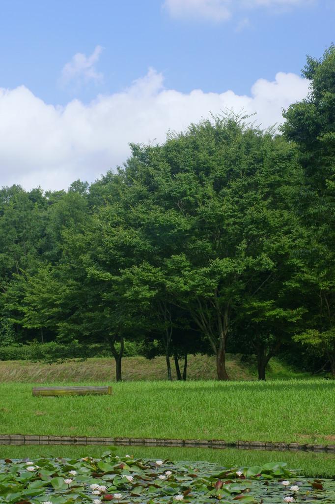 緑と青空(1)