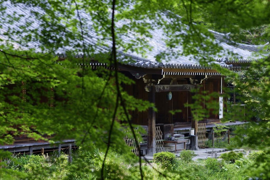 浄瑠璃寺にて(5)