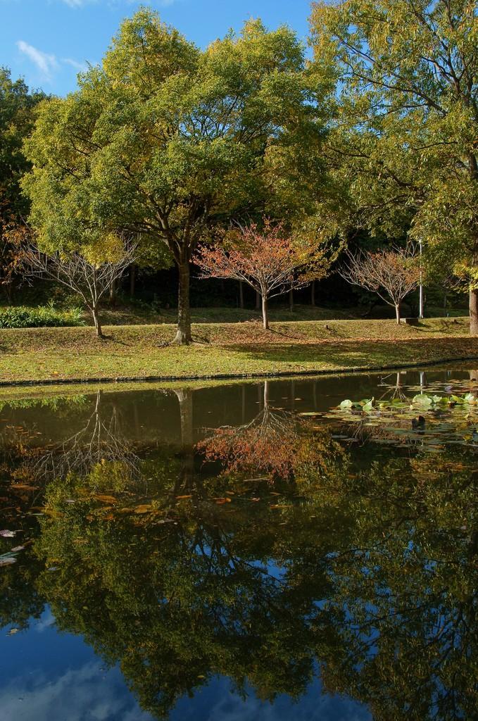 湖面の風景
