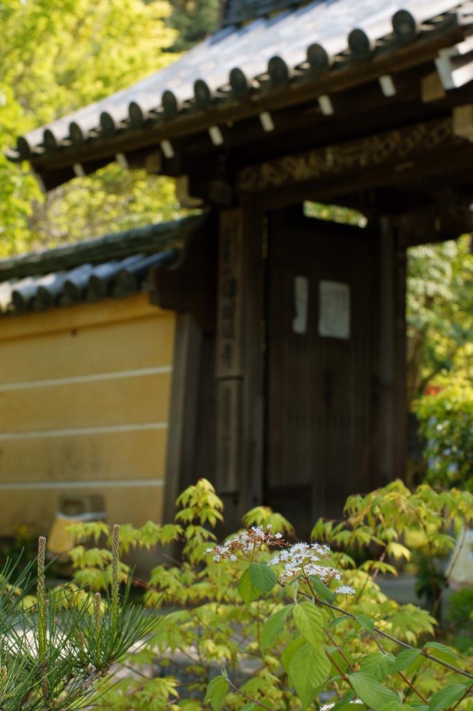 浄瑠璃寺にて(4)