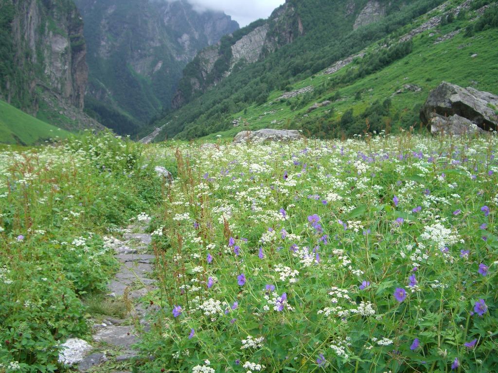 花の谷(インド)