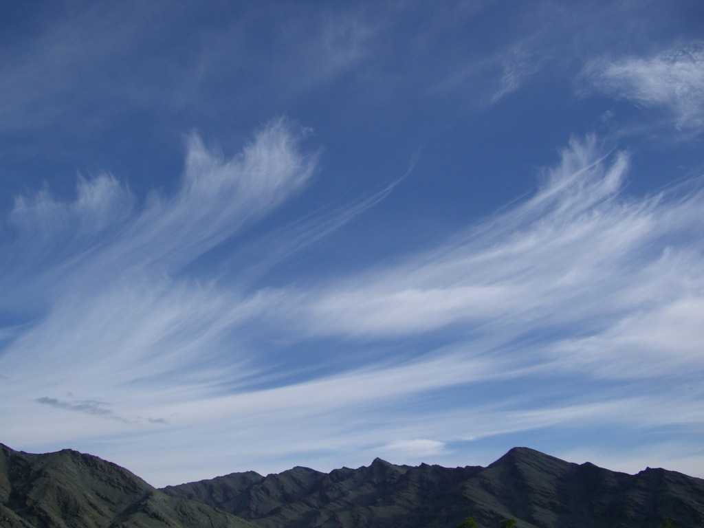 モンゴルの風
