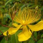 CASIO EX-Z1000で撮影した植物(美容柳)の写真(画像)
