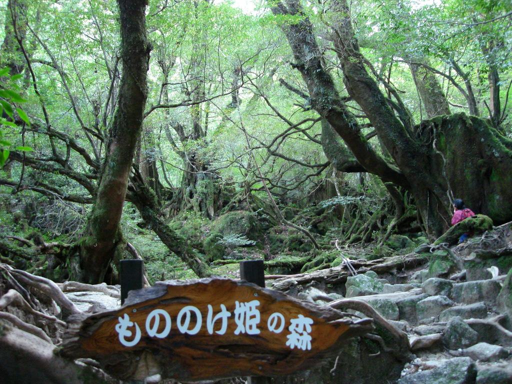 もののけ姫の森(屋久島)