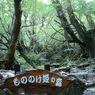 SONY DSC-N1で撮影した風景(もののけ姫の森(屋久島))の写真(画像)