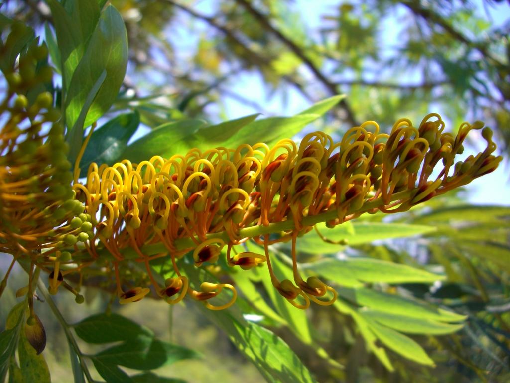 マダガスカルのめずらしい花