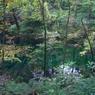 CASIO EX-Z1000で撮影した風景(青池(白神山地))の写真(画像)