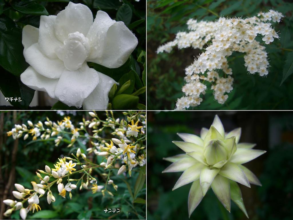 白い花四種