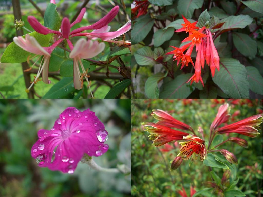 赤い花四種