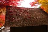 茅葺きの落葉