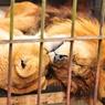 NIKON NIKON D300で撮影した動物(モデルの旦那)の写真(画像)