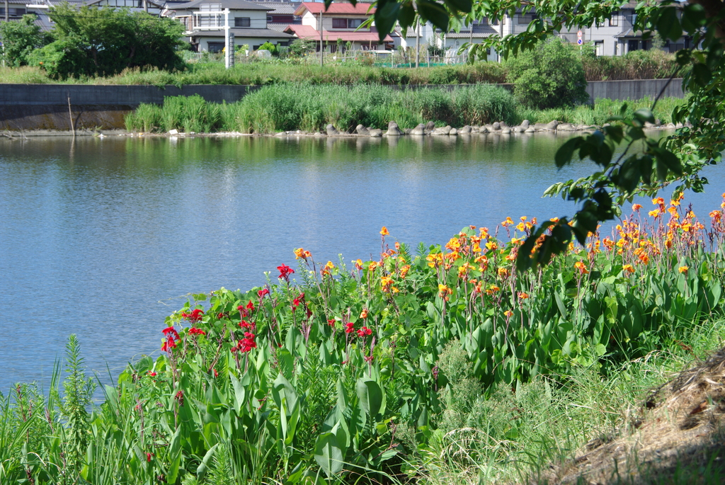riverside flower