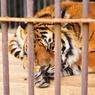 NIKON NIKON D300で撮影した動物(お昼寝)の写真(画像)