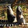 NIKON NIKON D300で撮影した動物(呼んだ~?♪)の写真(画像)