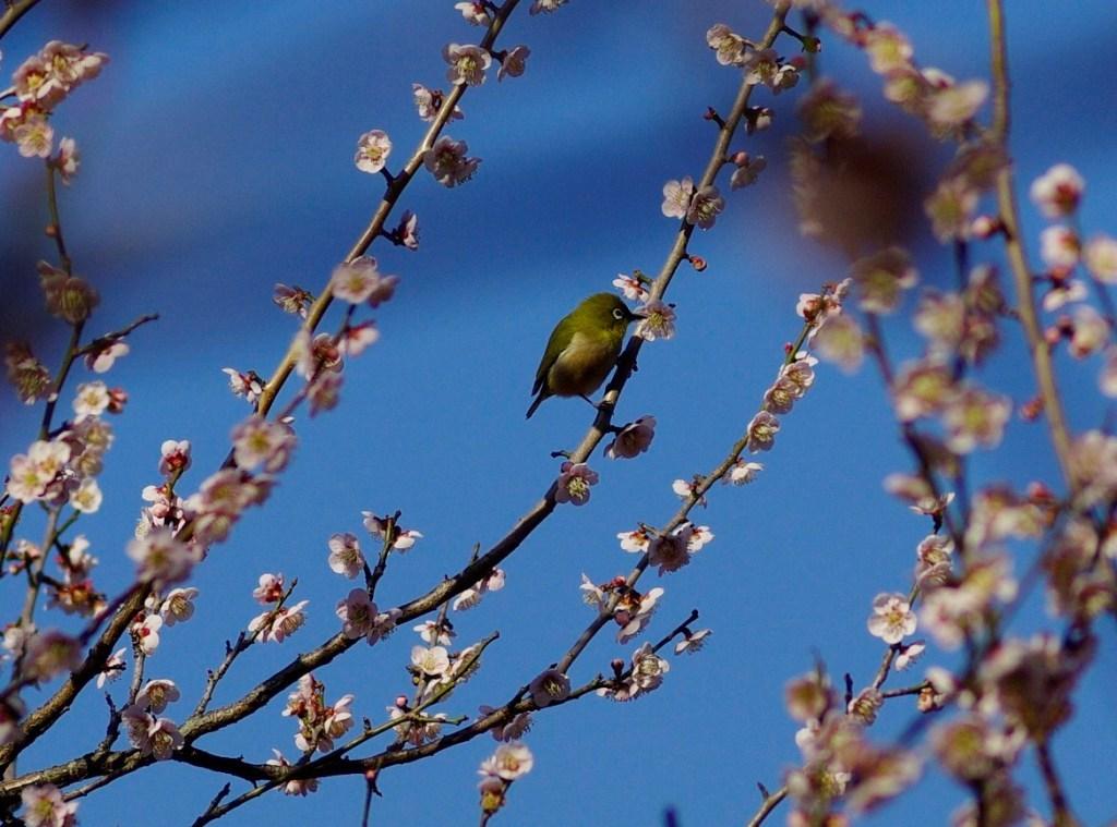 春のお客さん