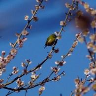 PENTAX PENTAX K20Dで撮影した動物(春のお客さん)の写真(画像)