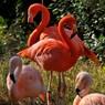 NIKON NIKON D300で撮影した動物(RED)の写真(画像)