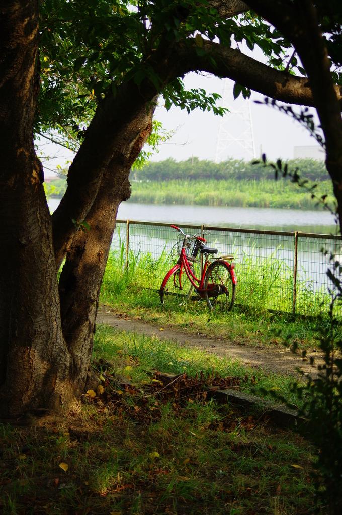 黄昏自転車