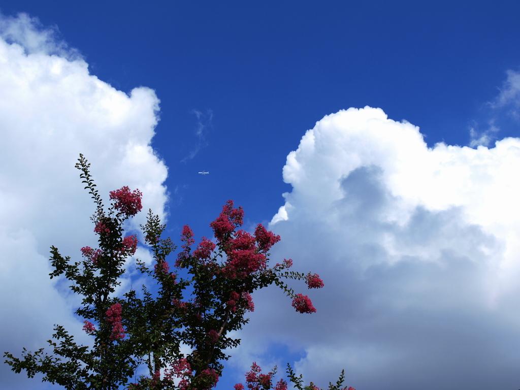 雲を突き抜けて!