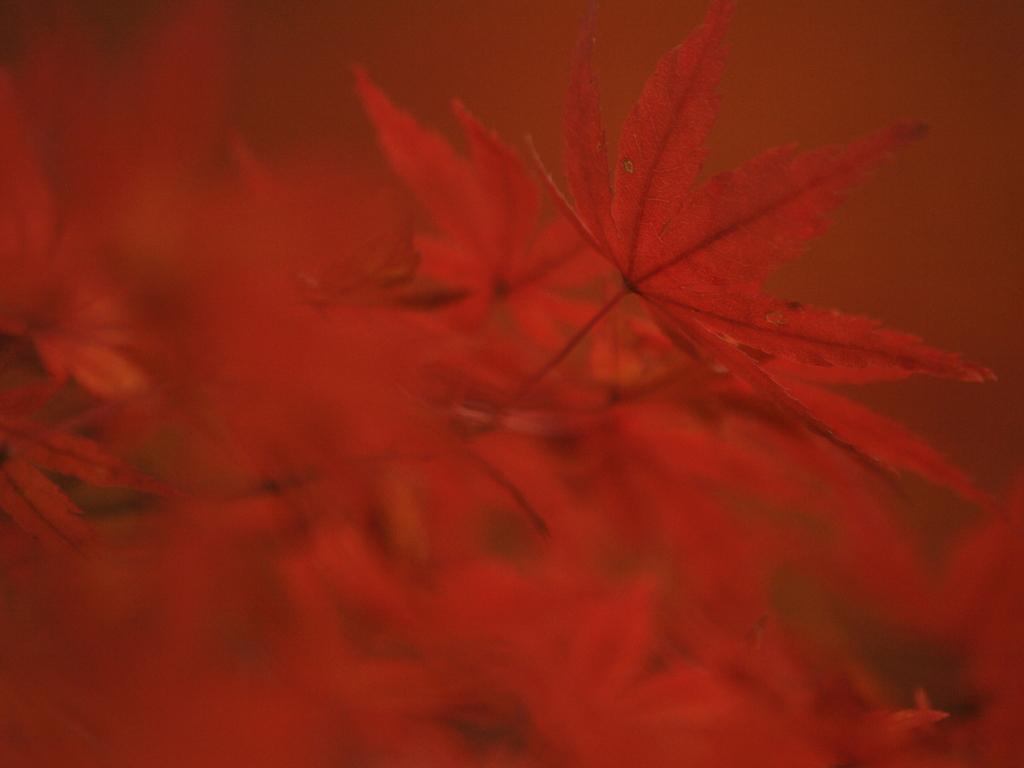 赤いキャンバス