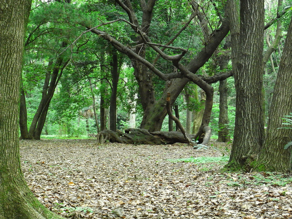 光が丘公園 雑木林