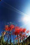 彼岸花と秋の空