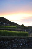 坂折棚田の夕日
